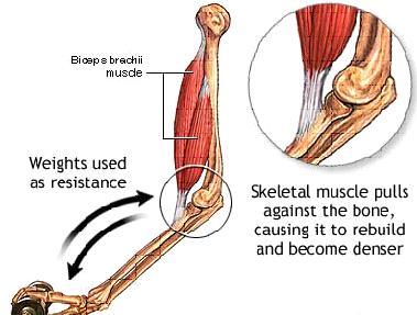 Ten Tips to Increase Bone Strength