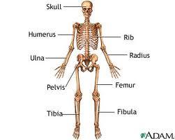 Acrodysostosis: Causes, Symptoms, Diagnosis and Treatments