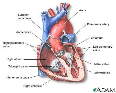 Takayasu arteritis: Overview, Causes