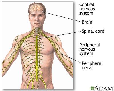 Distal median nerve dysfunction : Overview, Causes, & Risk Factors