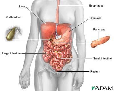 Crohn's disease : Overview, Causes, & Risk Factors