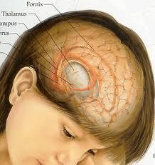 Brain Tumor, Symptoms and Treatment