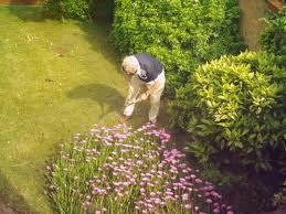 Alzheimer's sufferers should choose gardening hobby