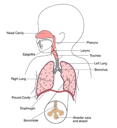 Bronchitis in Small Children